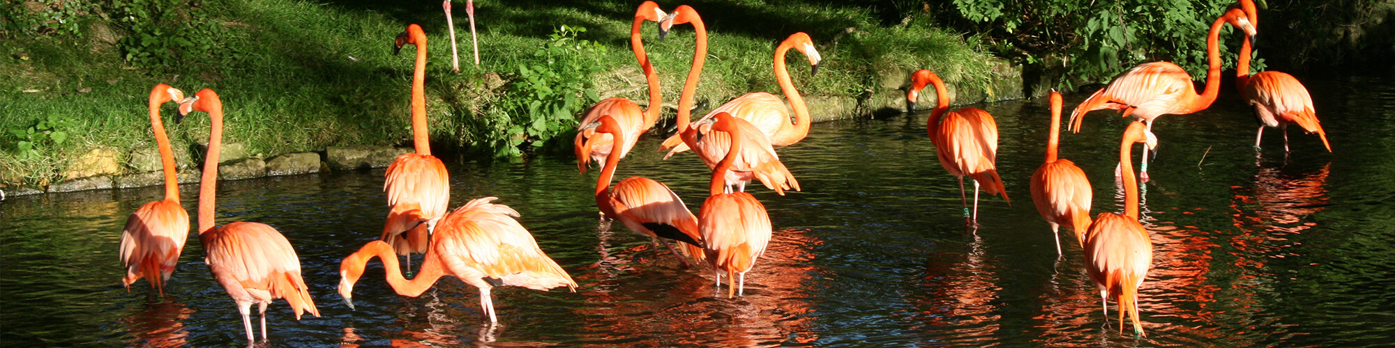 Flamingo Prtfolio