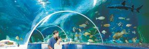 Aquarium-copy-300x100 Aquarium copy