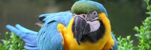 Birdland-300x100 Birdland