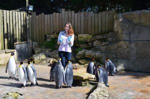 12993531_1190458554327711_2204205139498545205_n-300x198 Feeding the Penguins at Birdland Park & Gardens