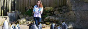 penguins-300x100 penguins