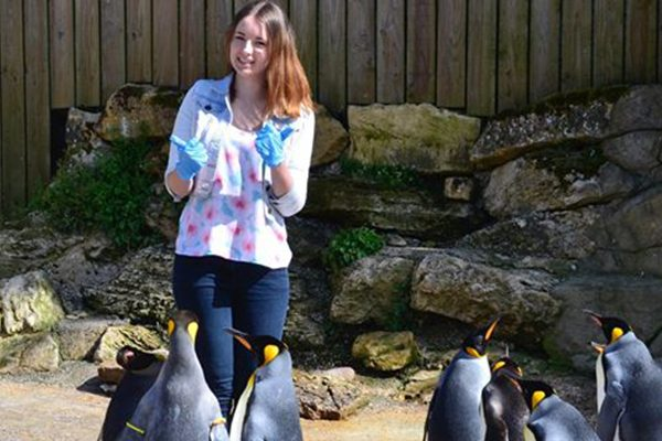 Penguins at Birdland, Highlights of 2016