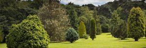 Pinetum-300x100 Pinetum Gardens