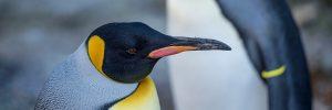 penguin-day-300x100 world penguin day at birdland