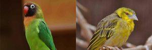 African-birds-300x100 African birds at Birdland Park & Gardens