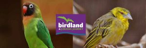 Birds-copy-300x100 African birds at Birdland Park & Gardens