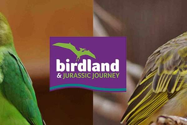 African birds at Birdland Park & Gardens