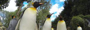 Penguin-week-300x100 Penguin week